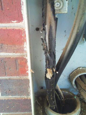 Photo 4. Conductor damage due to insulation failure that is not detectable from the exterior of the meter enclosure.